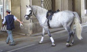 École espagnole d'équitation de Vienne